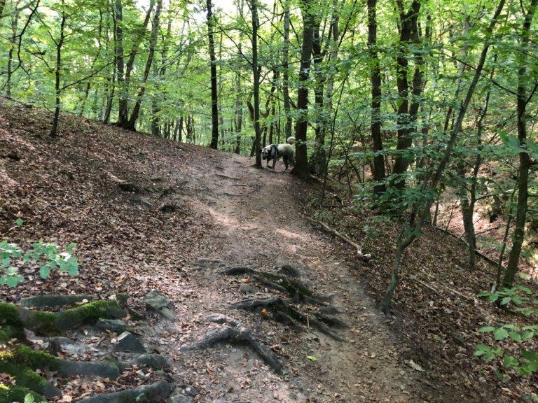 Promenade-Sart-Tilman