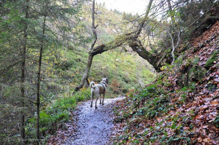La petite vallée sauvage du Trôs Marets
