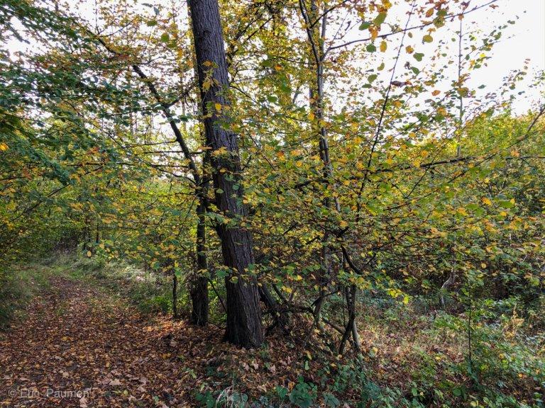 Les belles couleurs de l'automne